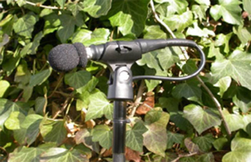 Wildlife Acoustics Case Study