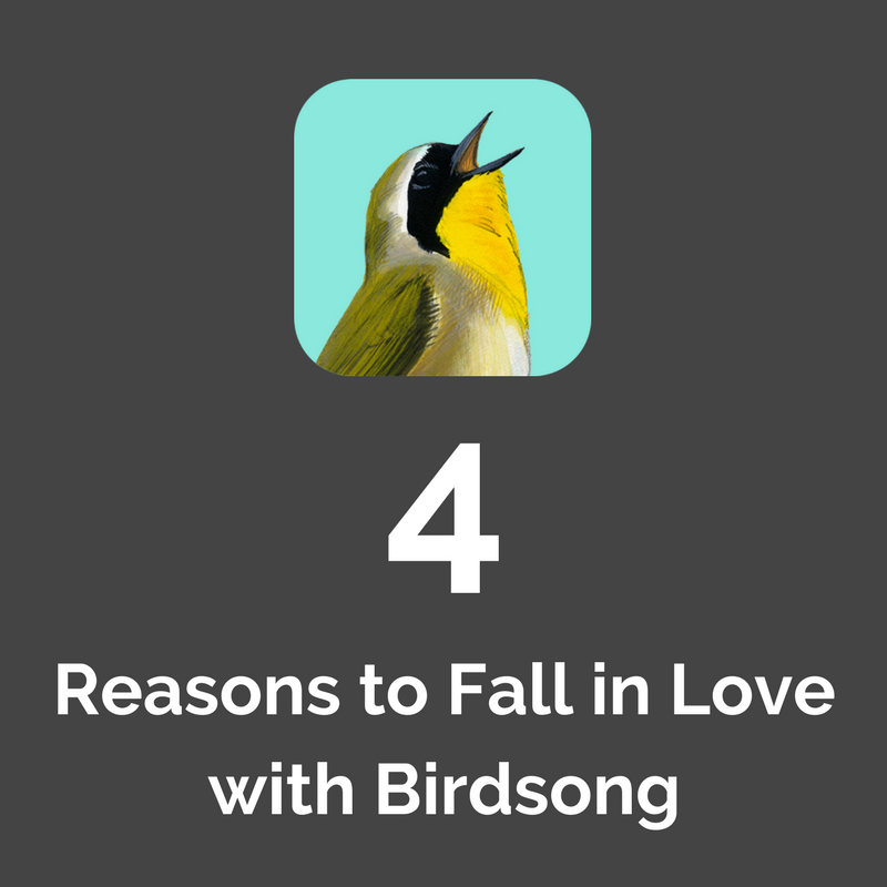 4 Reasons to Fall in Love with Birdsong