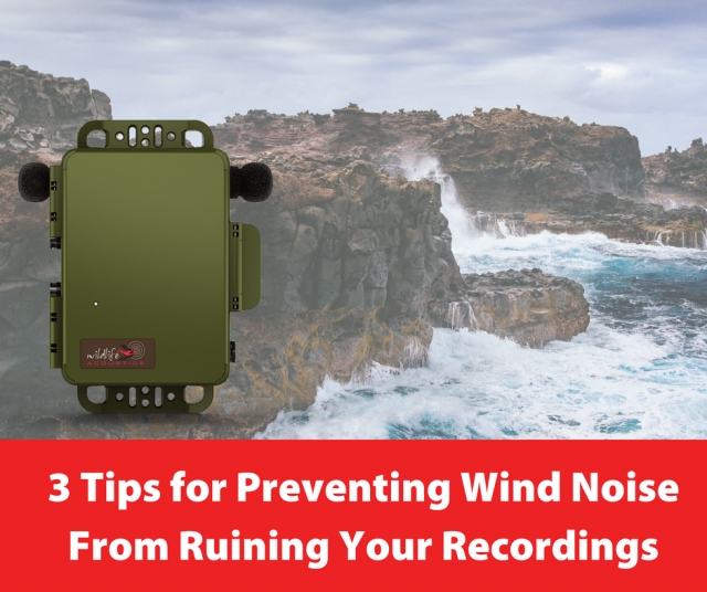 3 Tips to Prevent Wind Noise From Ruining Your Recordings