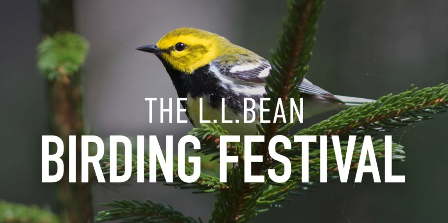 5 Can't-Miss Events at The L.L. Bean Maine Audubon Birding Festival