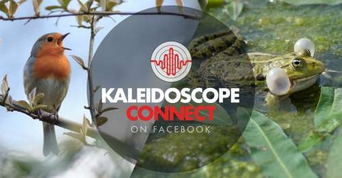 Join the Kaleidoscope Connect Community