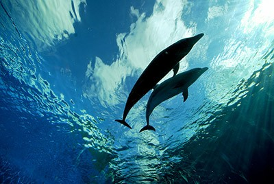 Dolphins call their closest companions by name