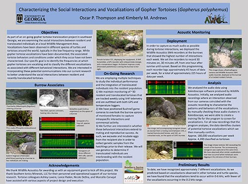 Burrow Banter: Social Vocalizations in Gopher Tortoises (Gopherus Polyphemus)