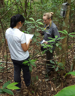 Detecting the World's Rarest Ape