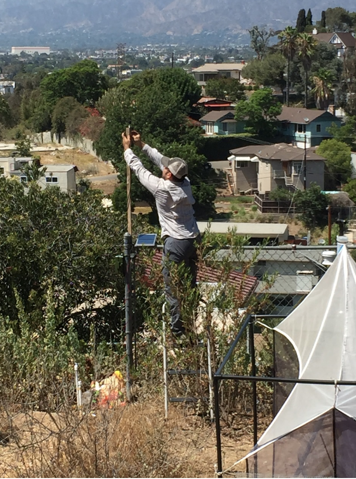 Figure 1. Setting up an SM4BAT recorder in an urban backyard in Los Angeles.